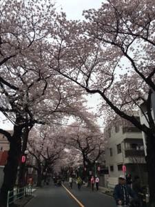 府中桜祭り