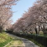 桜2018(2)